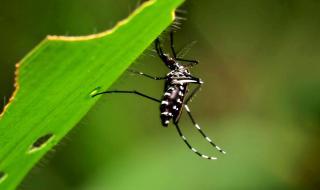 Brasileiros versus Aedes aegypti: vai encarar?