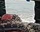 Filhote de baleia é encontrado morto no Matadeiro